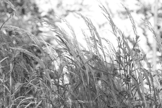 Fotosuche Wiese Gras