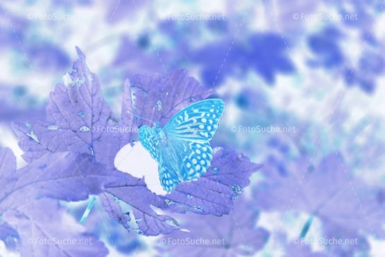 Fotosuche Schmetterling Blatt
