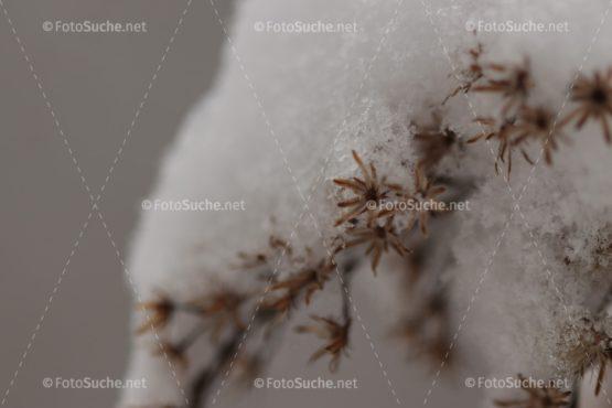 Fotosuche Schneekristall