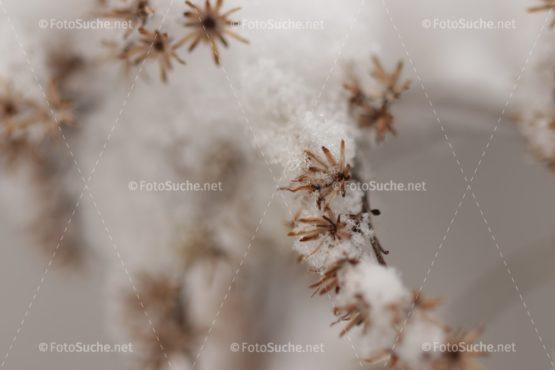 Fotosuche Schneekristall Ast