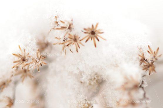 Fotosuche Schnee Blumen