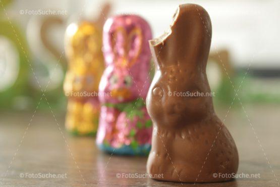 Fotosuche Osterhase Schokolade