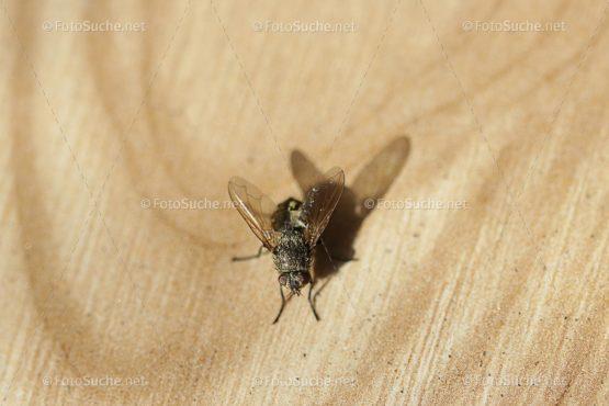 Fotosuche Makro Fliege Insekten