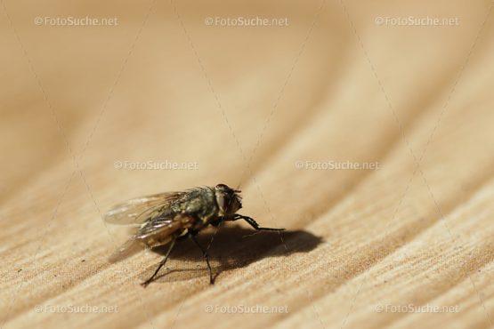 Fotosuche Makro Fliege Insekten 1