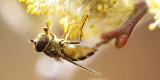 Fotosuche Makro Fliege Insekten 4
