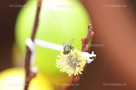 Fotosuche Makro Fliege Insekten 8