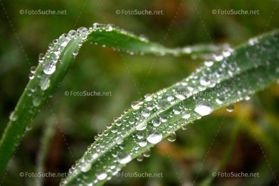 Wassertropfen Blatt Morgentau Foto kaufen Fotoshop