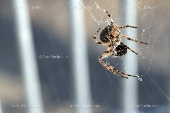 Spinne Insekten Foto kaufen Fotoshop