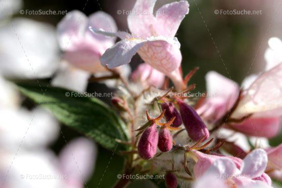 Blüten Sakura Blumen Frühling Foto kaufen Fotoshop