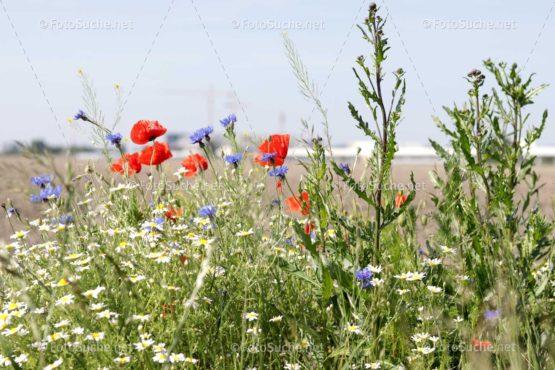 Blumenwiese Mohn Foto kaufen Fotoshop