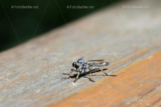Bremsen Insekten Foto kaufen Fotoshop