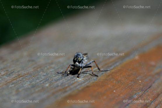 Bremsen Insekten Stich Foto kaufen Fotoshop