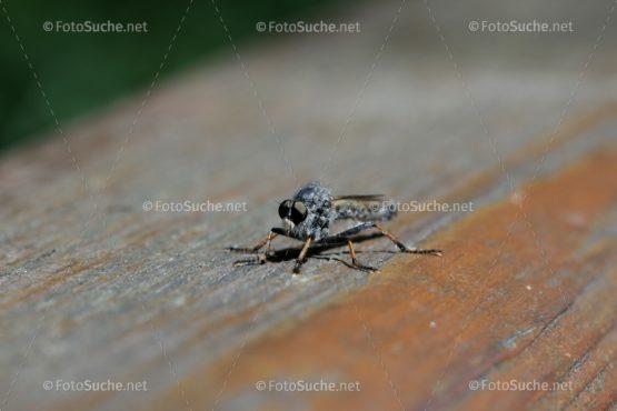 Bremsen Insekten Facettenaugen Foto kaufen Fotoshop