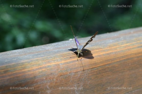 Schmetterling Insekten Foto kaufen Fotoshop