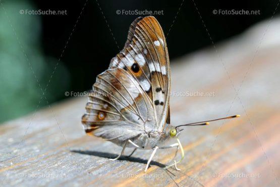 Schmetterling Insekten Rüssel Foto kaufen Fotoshop