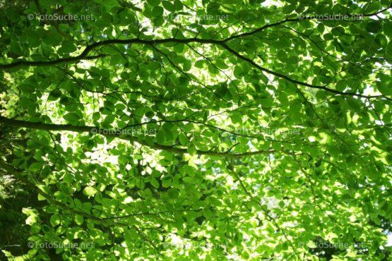FOTO GRÜNES LAUBDACH | Natürliches Foto kaufen | FotoShop