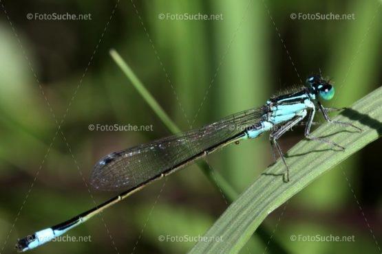 Foto Libelle Makro Grashalm | Natur Foto kaufen | FotoShop