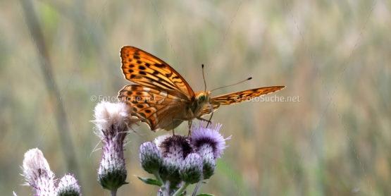 Foto Schmetterling Panorama | Foto kaufen Foto kaufen | Fotoshop
