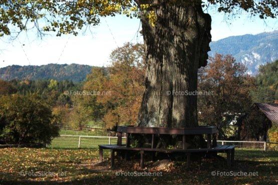 Foto Alter Baum Bank | Foto kaufen Foto kaufen | Fotosuchen