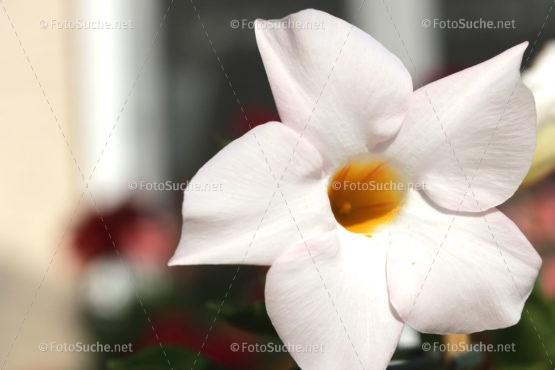Foto Weiße Blume Nahaufnahme Duft | Foto kaufen | FotoShop.eu