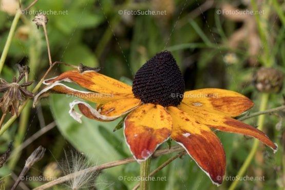 Foto Blüten Herbst | schönes Foto kaufen | Fotosuchen