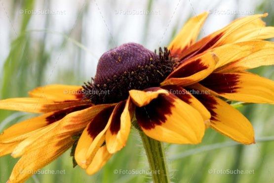 Foto Blüten Blütenstaub | blühendes Foto kaufen | Fotosuchen